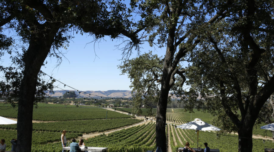 Scribe Winery: Making Wine Hip